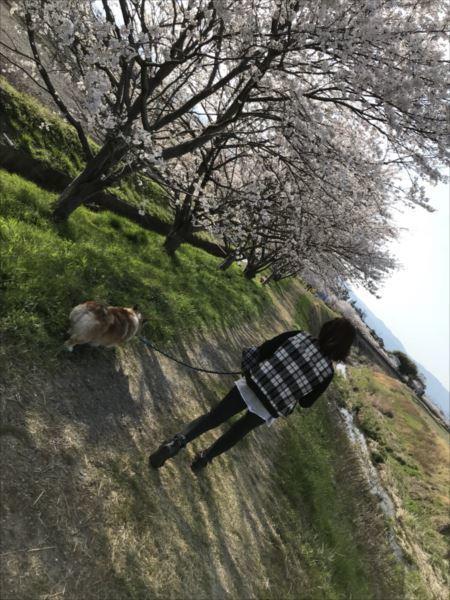 2018.04.01桜5.jpg