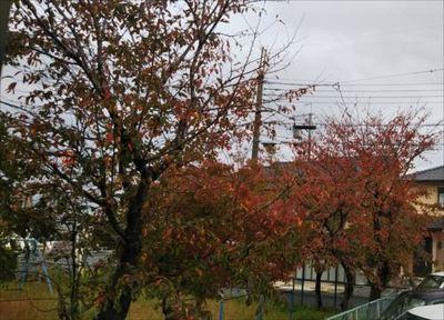 2018.11.09紅葉.jpg