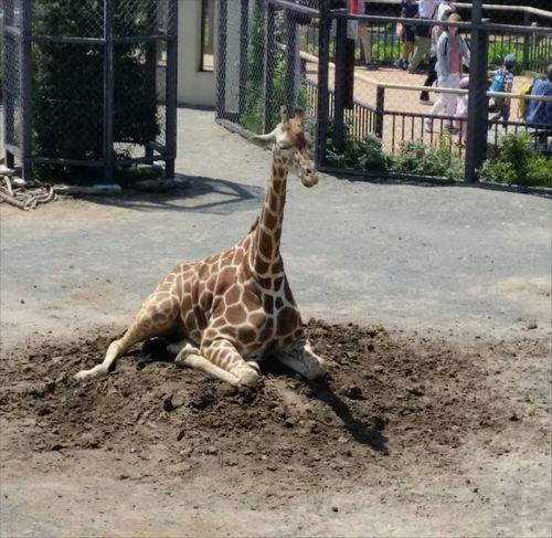 動物園.jpg